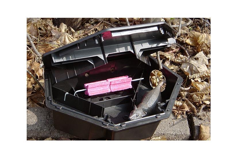 Das Foto zeigt eine geöffnete Köderbox mit Ködern und einer Rattenatrappe.©DBM, Sonja Stender